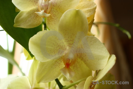 Flower plant orchid.
