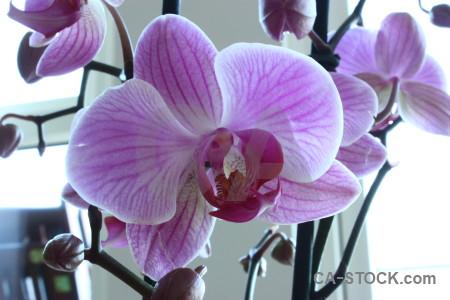 Flower plant orchid purple white.