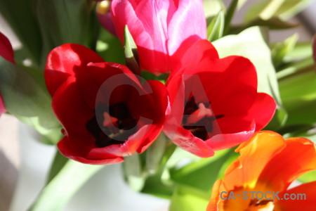 Flower plant pink orange red.