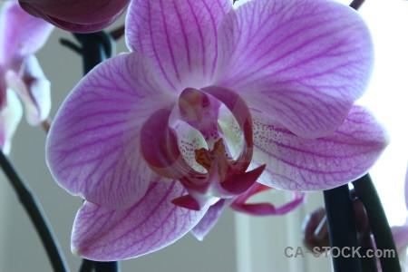 Flower plant purple orchid.