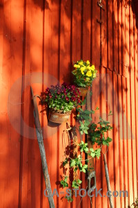 Flower plant red orange pot.