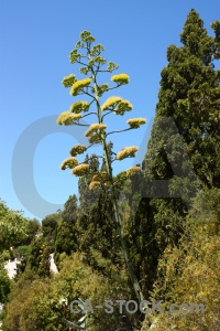 Flower sky javea green spain.