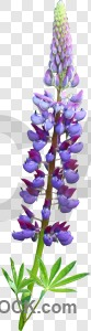 Flower transparent cut out plant.