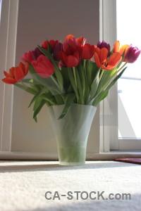 Flower tulip bouquet plant vase.