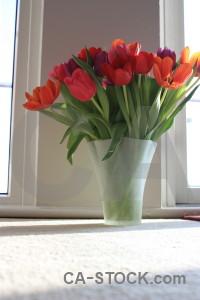 Flower tulip vase plant bouquet.