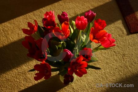 Flower vase bouquet tulip plant.