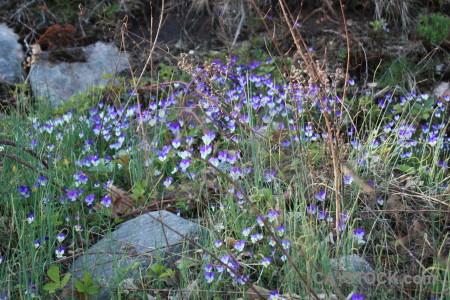 Flower violet green plant.