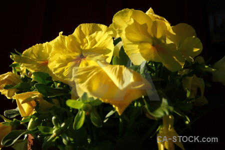 Flower yellow black plant.