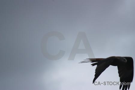Flying animal bird sky.