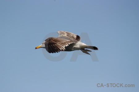 Flying animal sky bird.