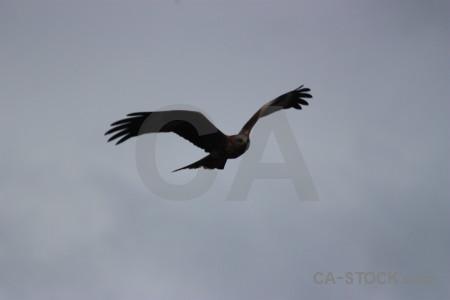 Flying animal sky bird gray.