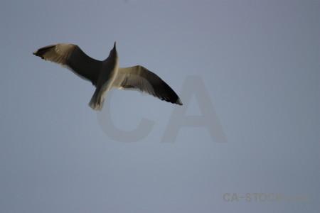 Flying animal sky seagull bird.