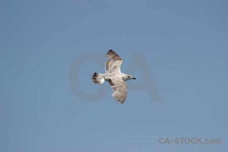 Flying bird animal sky.