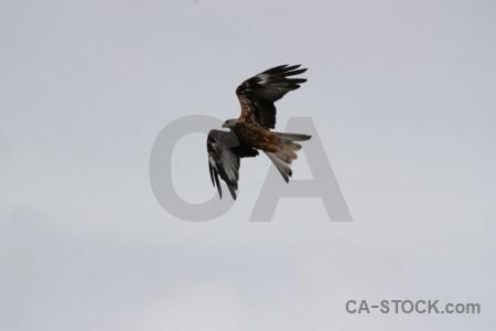 Flying bird gray sky animal.