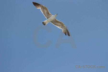 Flying bird sky animal.