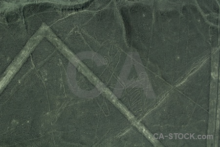 Flying nazca lines aerial peru animal.