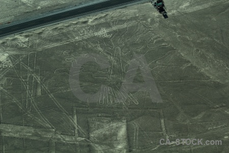 Flying nazca peru tree unesco.