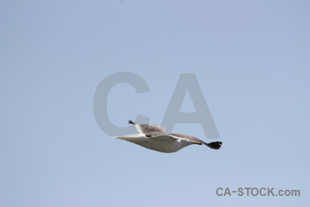 Flying sky animal bird.