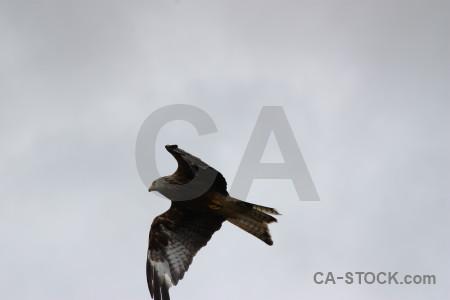 Flying sky bird animal.