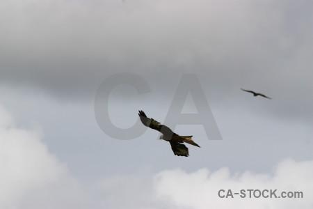 Flying sky bird gray animal.