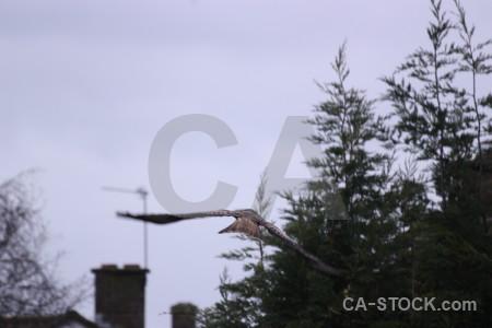 Flying white bird sky animal.