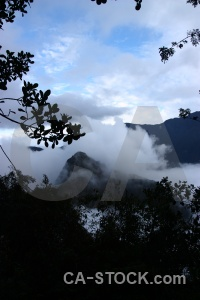 Fog tree peru inca altitude.