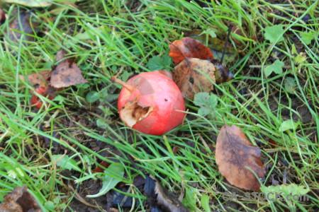 Food green apple.