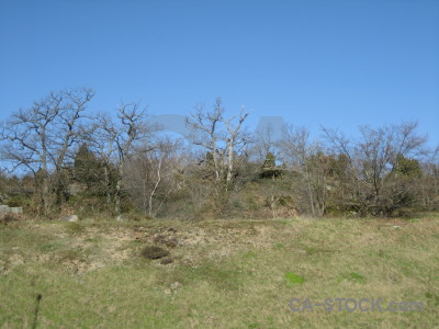 Forest blue green ground.