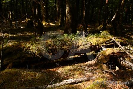 Forest branch moss plant lake sylvan trek.
