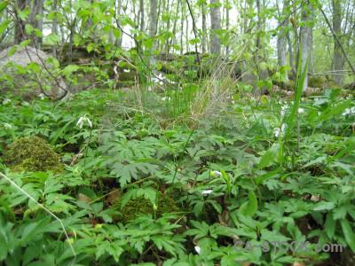 Forest green ground.