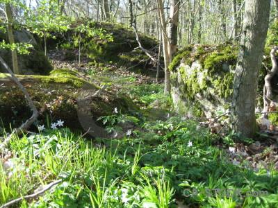Forest ground green.