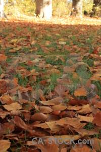 Forest orange brown ground green.