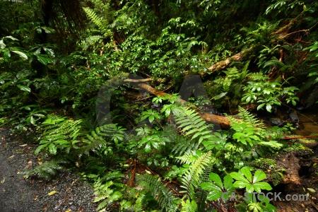 Forest owaka plant south island purakaunui falls.