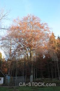 Forest tree cyan single.