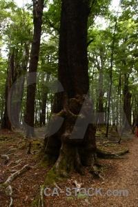 Forest trek plant new zealand root.