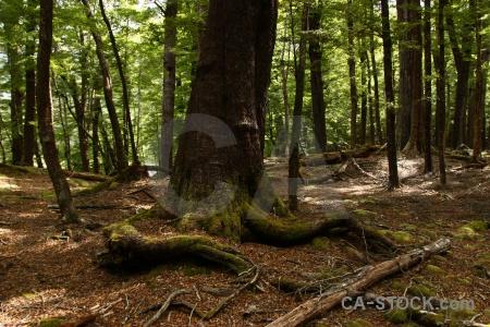 Forest trek trunk root plant.