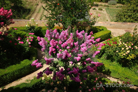 Fortress garden flower green la alhambra de granada.