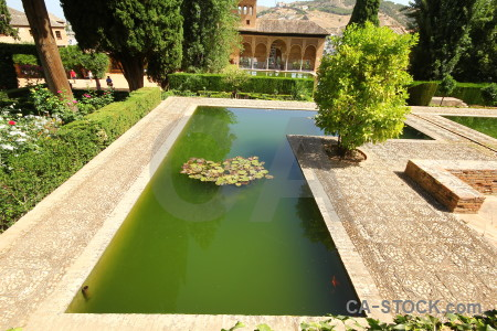 Fortress water lily pond plant alhambra.