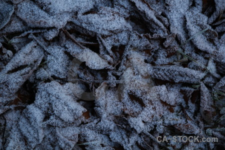 Frost leaf europe karlskrona sweden.