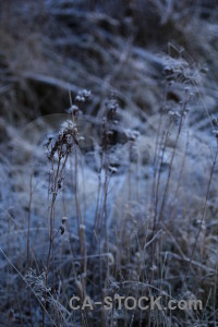 Frost sweden karlskrona europe.
