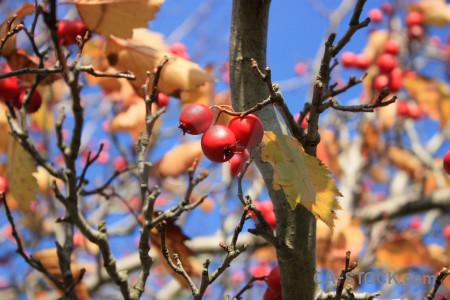 Fruit red berry food orange.