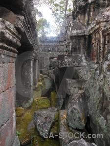 Fungus banteay kdei cambodia southeast asia tree.
