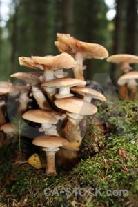 Fungus brown toadstool mushroom green.