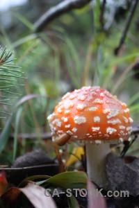 Fungus green mushroom orange toadstool.