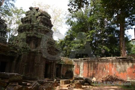 Fungus khmer southeast asia angkor unesco.