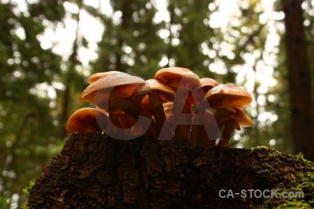Fungus mushroom toadstool.