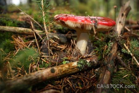 Fungus mushroom toadstool brown green.
