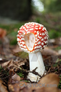 Fungus mushroom toadstool green brown.