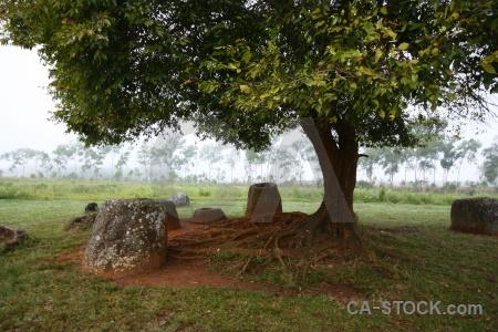 Fungus southeast asia laos grass site 1.