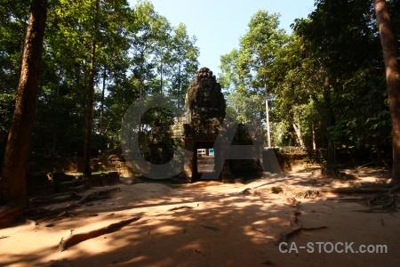 Fungus southeast asia tree lichen ta saom temple.